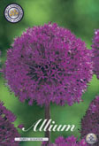 Allium Purple Sensation met 5 zakjes a 5 bollen