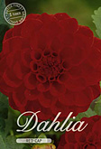 Dahlia Ball Red Cap per 1