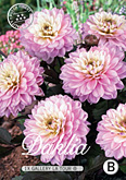 Dahlia Decorative Border Gallery La Tour per 1