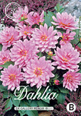 Dahlia Decorative Border Gallery Renoir per 1