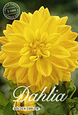 Dahlia Decorative Golden Emblem per 1