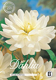 Dahlia Decorative Le Castle per 1