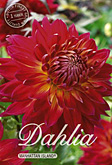 Dahlia Decorative Manhattan Island per 1