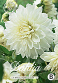 Dahlia Decorative White Perfection per 1